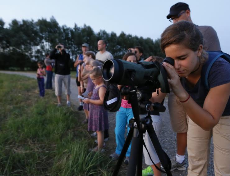 Observation de la faune